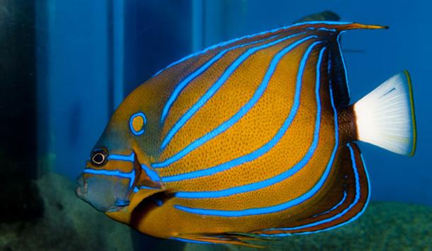 Рыбка в океанариуме
